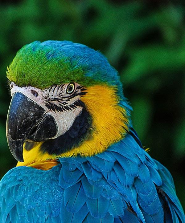Creazione sito negozio animali pappagallo