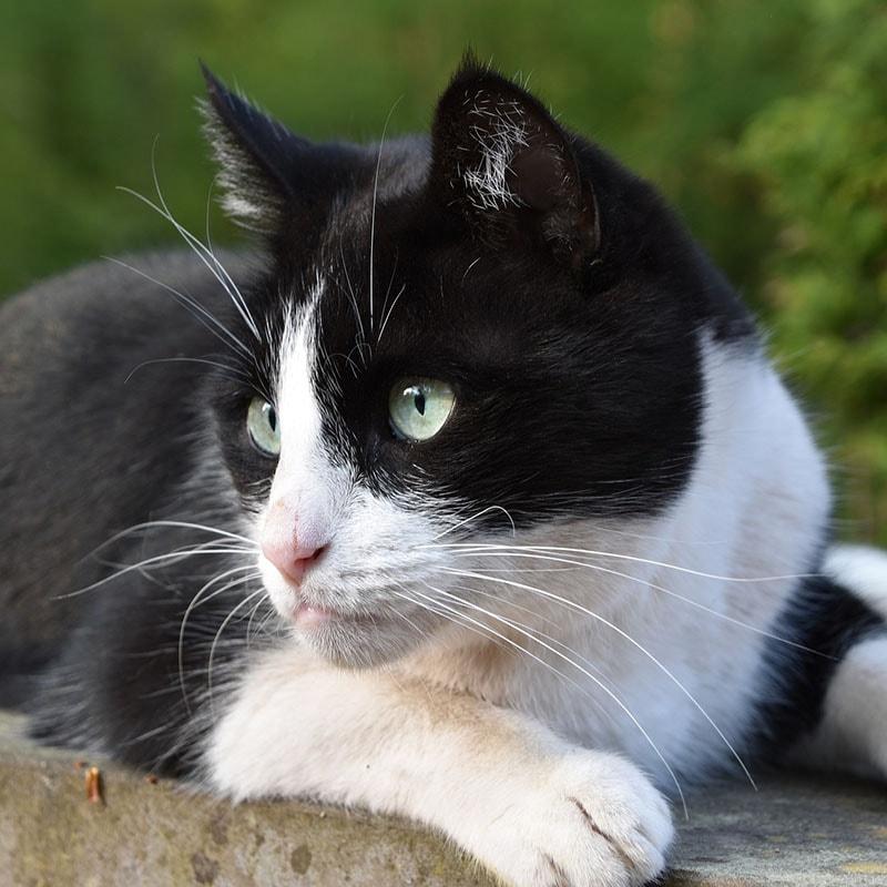 Creazione sito negozio animali gatto bianco e nero iwm