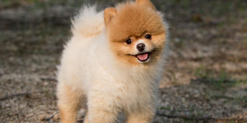 Creazione sito negozio animali cucciolo toy