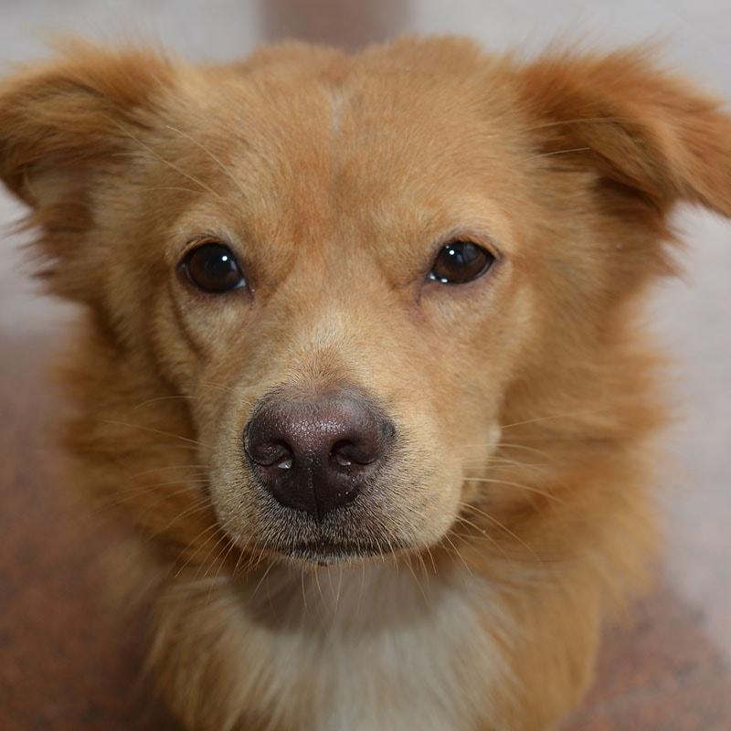 Creazione sito negozio animali cagnolino marrone iwm