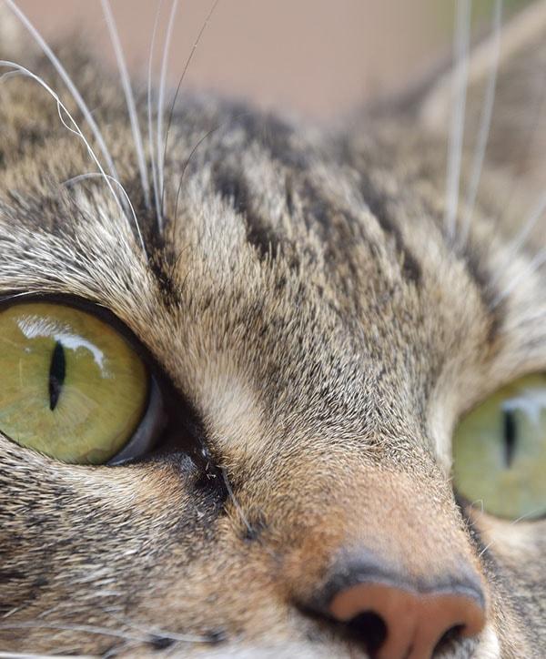 Creazione sito negozio animali evento dedicato ai gatti iwm