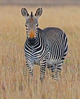 Creazione sito web alberghi b&b Hotel africa zebra italy web marketing
