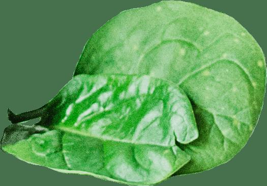 Creazione sito web per negozio Prodotti Bio foglie iwm