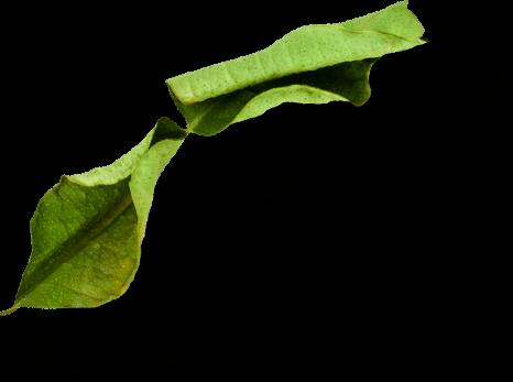 creazione sito bar foglie di lime Italy wm